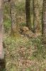 Scheibe 4 - Hase
