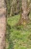 Scheibe 5 - Stachelschwein
