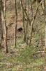 Scheibe 6 - Bär und Luchs